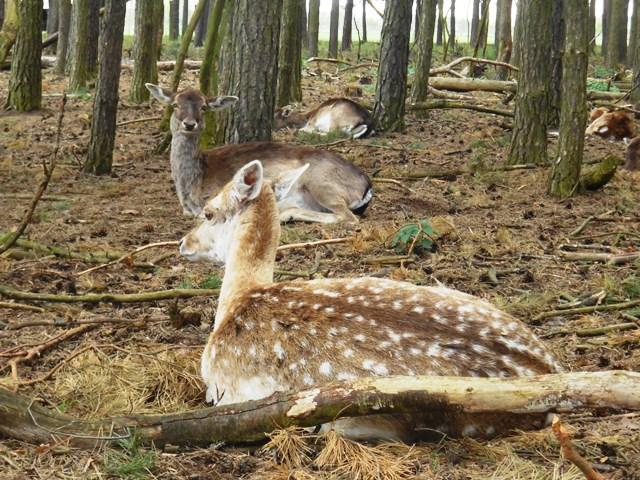 Naturwildgehege_Familientipp Spargelhof Klaistow