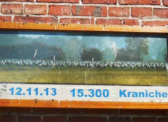 Kranichbeobachtung_Brandenburg