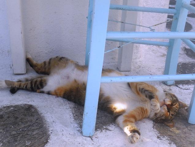 Paros Kykladen, Katze