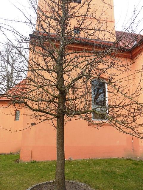 Fontanes berühmter Birnbaum in Ribbeck