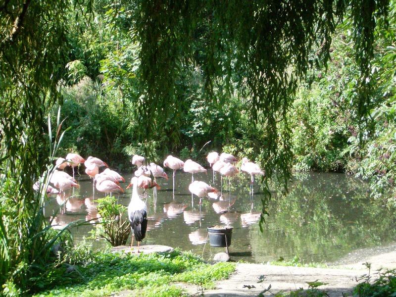 Rostocker Zoo_Familientipp