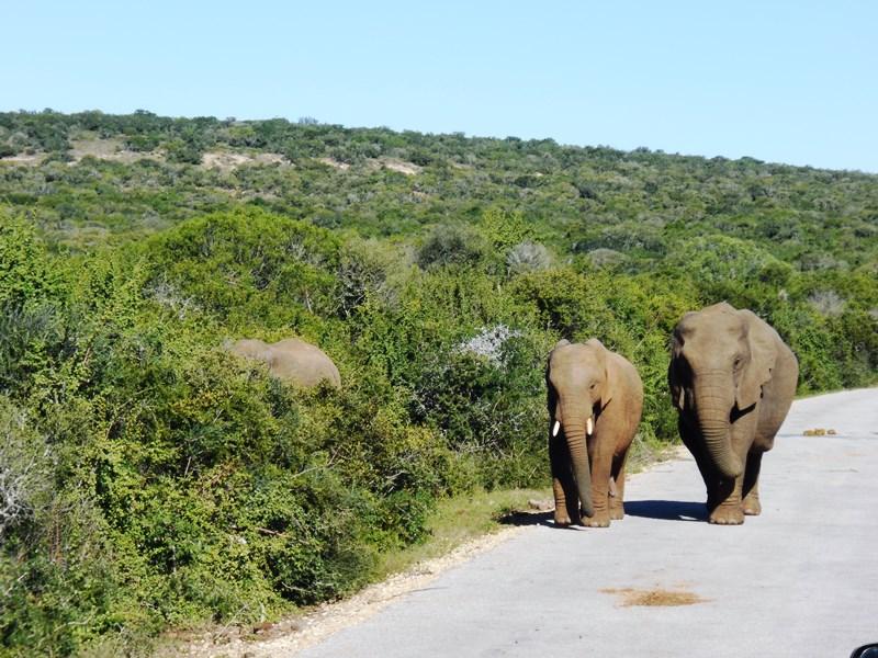 Südafrika_Familienreise_Safari_Elefant