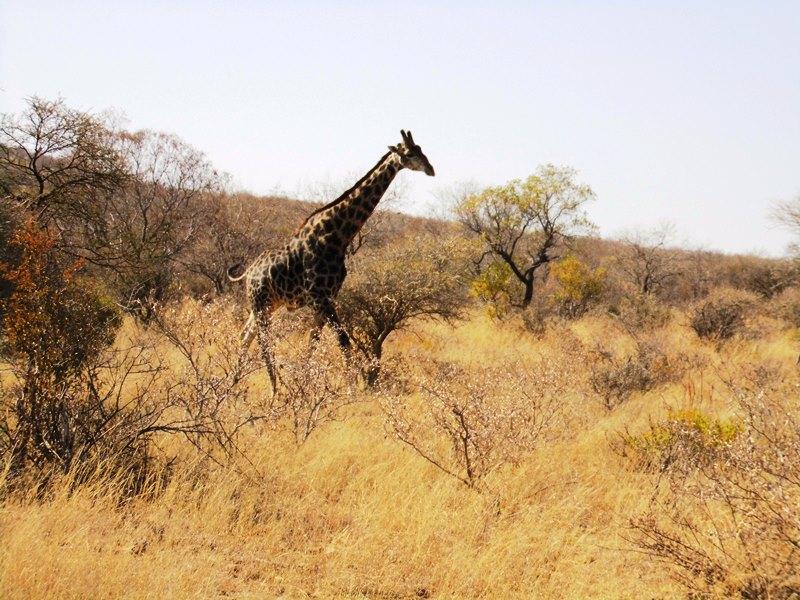 Familienreise Botswana_Safari