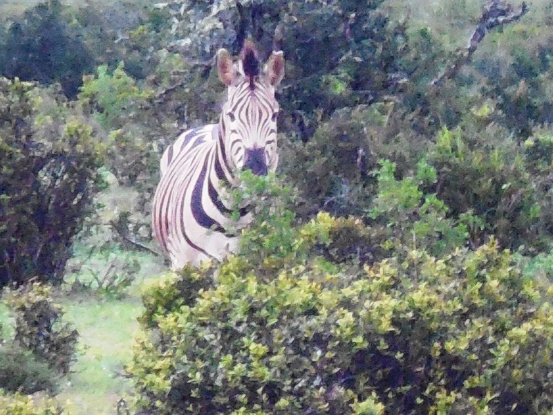 Südafrika_Familienreise_Safari