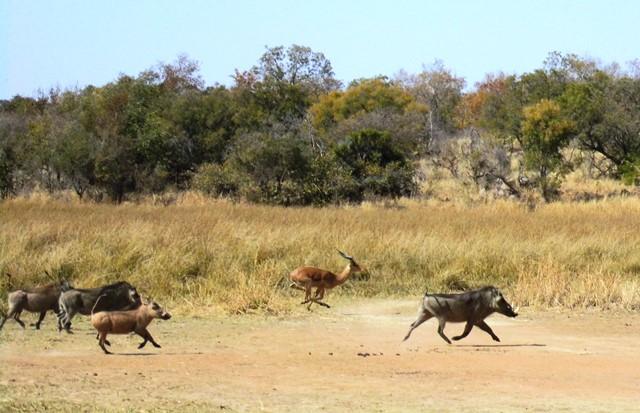 Warzenschwein_Afrika_Safari_mit_Familie