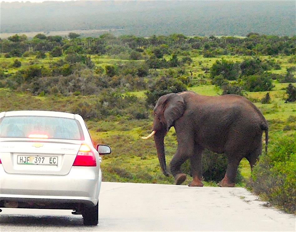 Safari Südafrika mit Kindern
