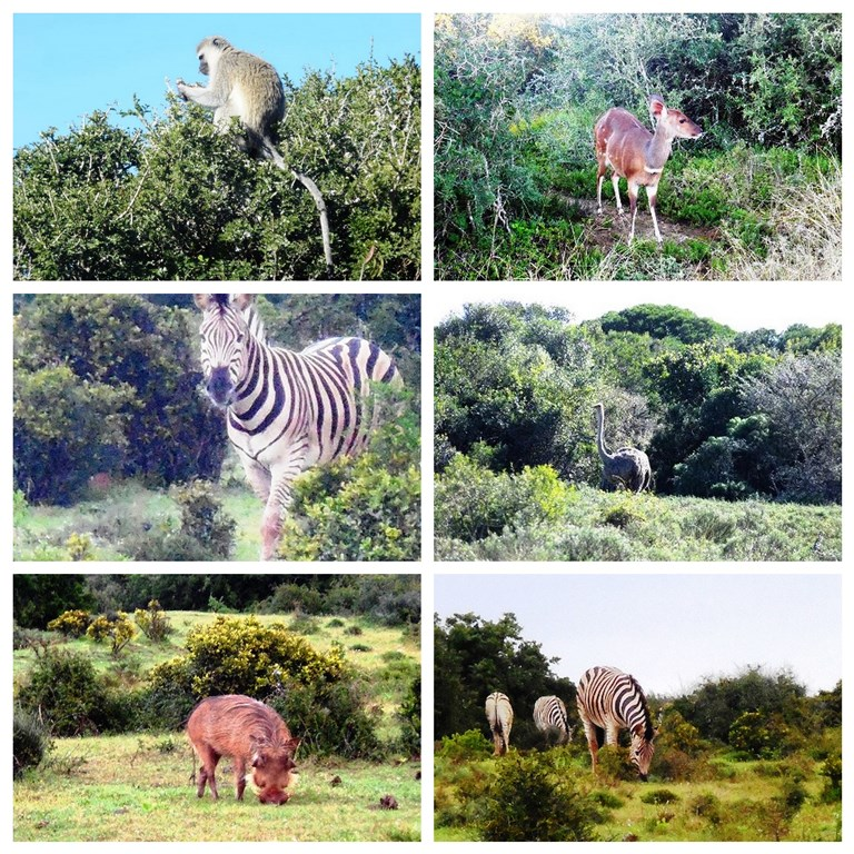 Tierbeobachtung_Afrika_Safari_mit_Kindern