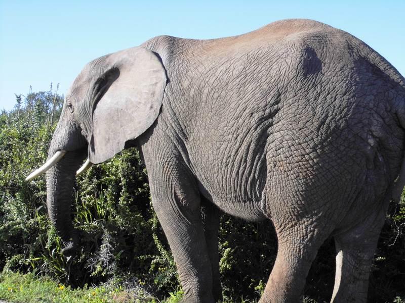 Big Five_Safari_Selbstfahrer_Südafrika_mit_Kind