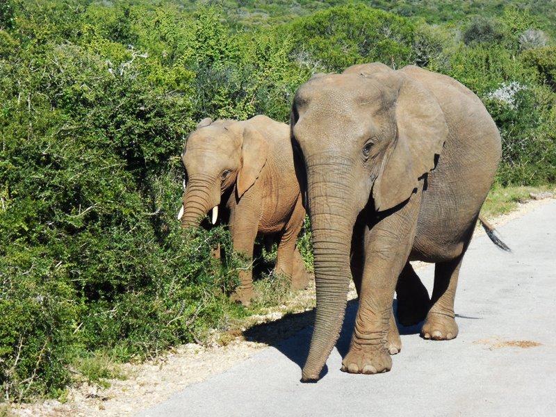 family_safari_addo_elephant_park (8)