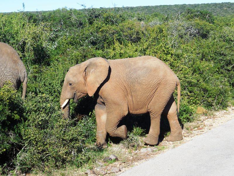 family_safari_addo_elephant_park (9)