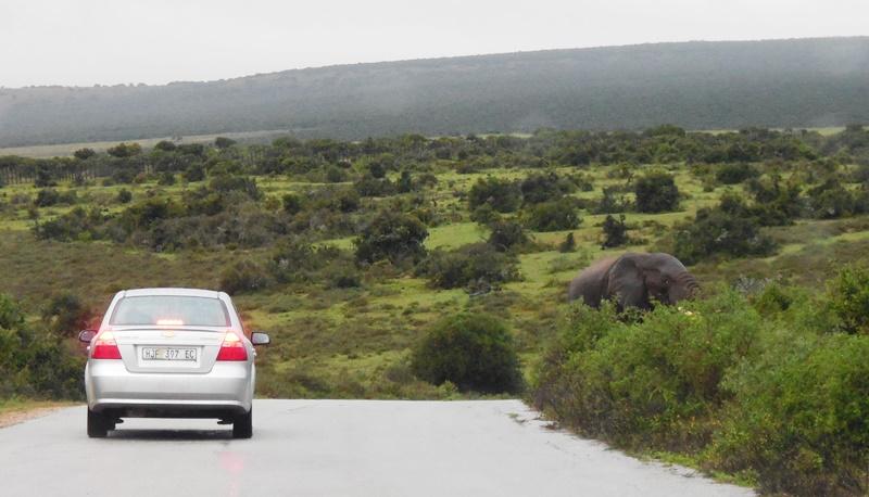 Selbsfahrersafari_Südafrika_Addo Elephant National Park