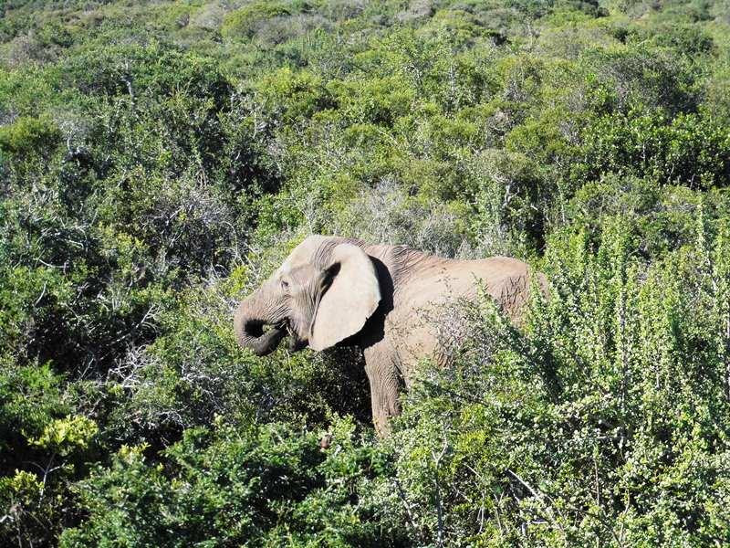 Tierbeobachtung mit Familie in Südafrika_Elefanten