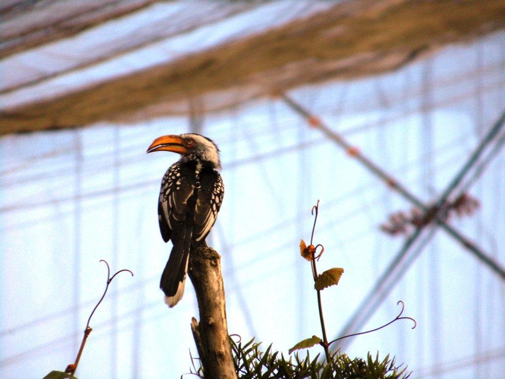 Birds of Eden_Vogelparadies_Südafrika, Gardenroute