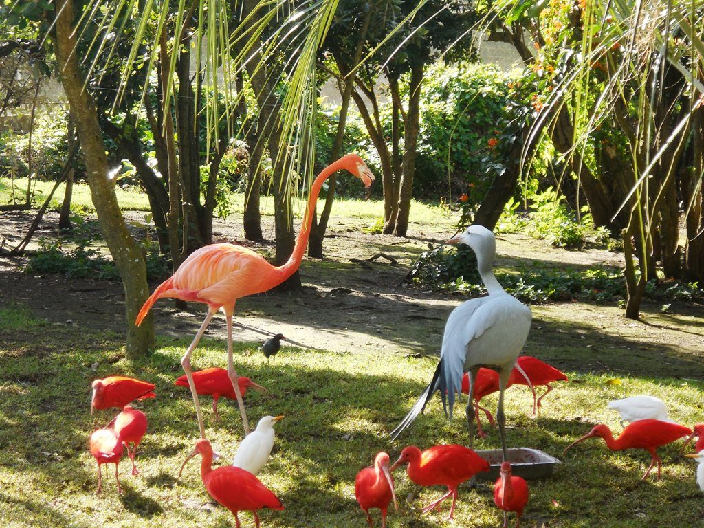 Vogelwelt Birds of eden_Flamingo_Flamingo