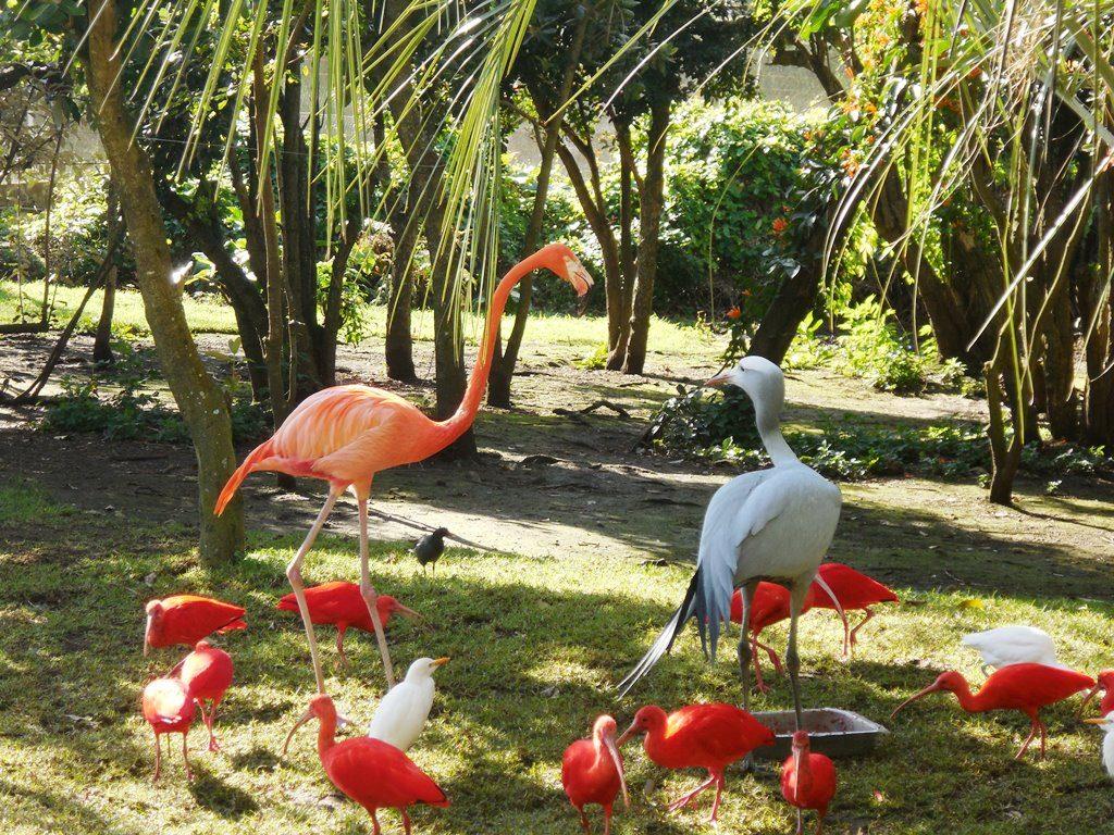 Vogelwelt Birds of eden_Flamingo_Flamingo