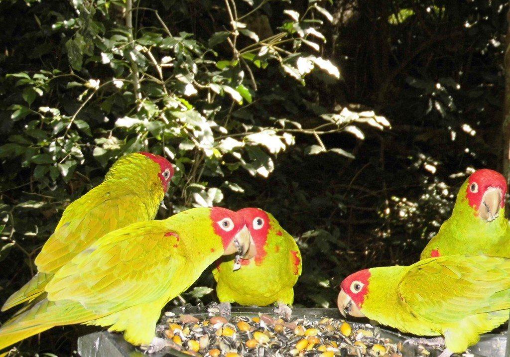 Birds of Eden Vogelfreifluggehege Garden Route Südafrika