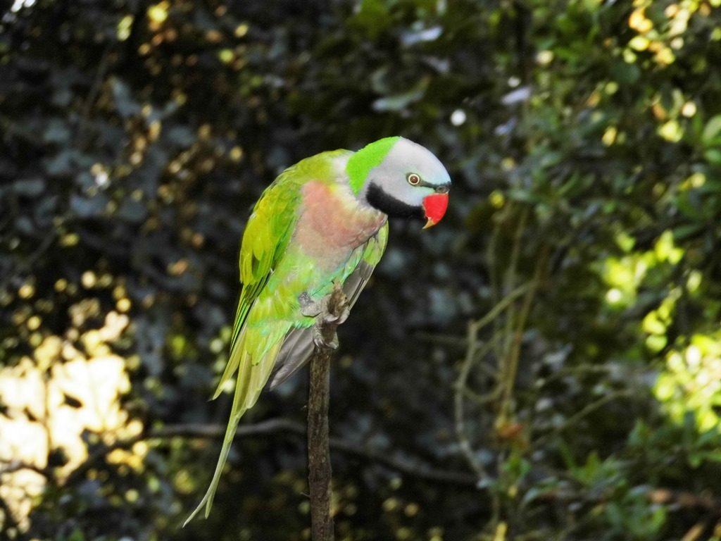 Birds of Eden_Familientipp Südafrika Garden Route