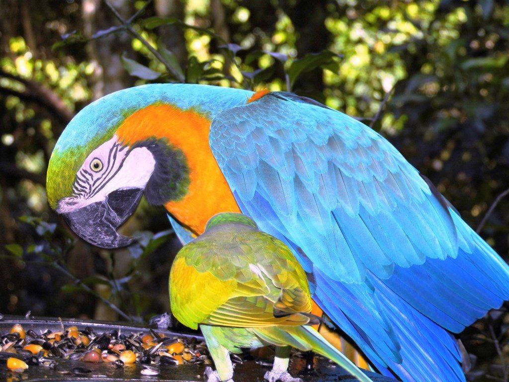 Papagei im Freifluggehege bei Plettenberg
