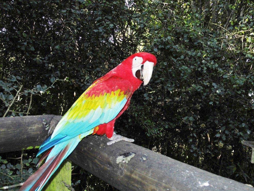 Birds of Eden_Familientipp Südafrika_Papagei