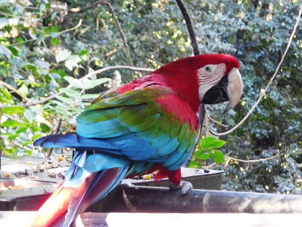 Papagei, Birds of Eden, Familientipp Garden Route, Südafrika