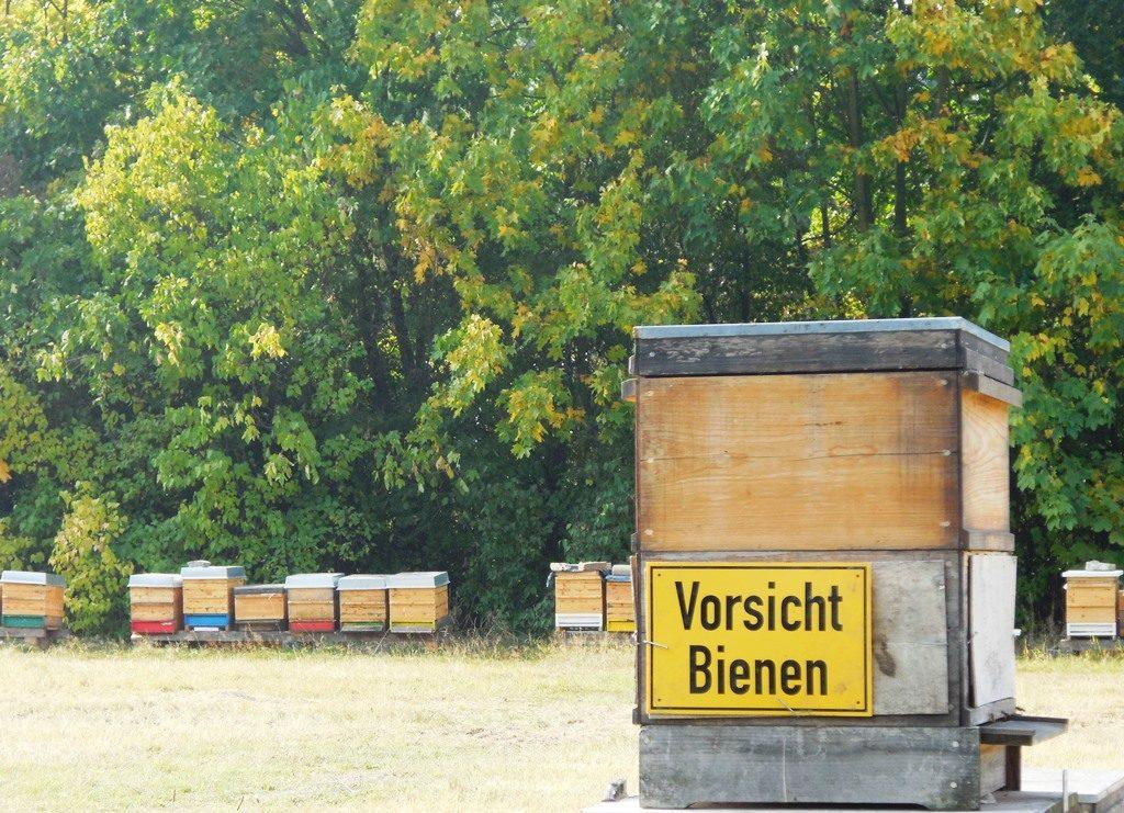 Botanischer Volkspark Pankow (13)