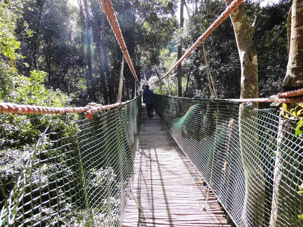 Affenfreigehege Monkeyland Südafrika mit längster Hängebrücke