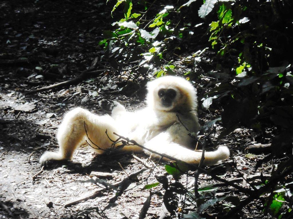 Garden Route Tipp_Südafrika_Monkeyland_Affenfreigehege (9)