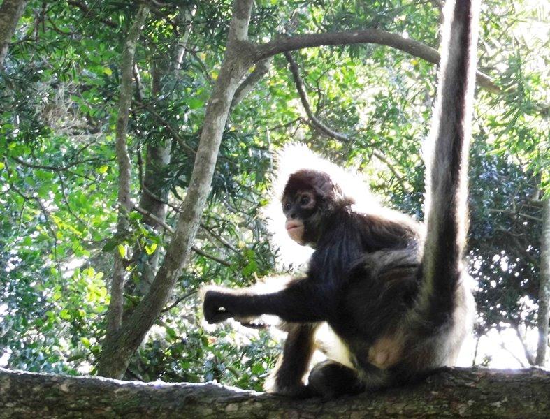 Monkey land, Familientipp, Garden Route