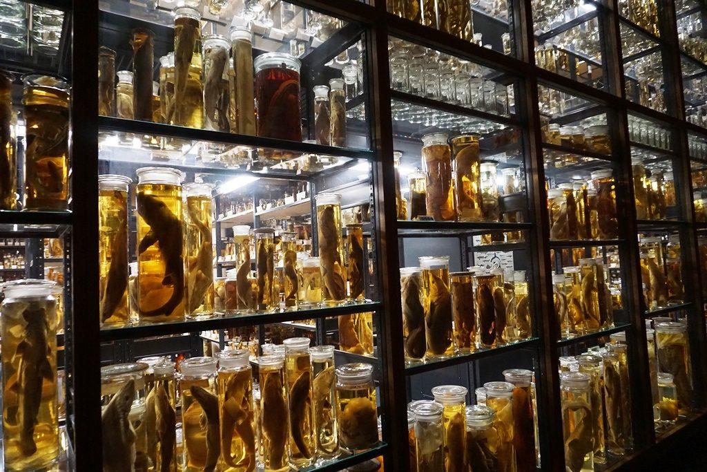 Naturkundemuseum Berlin_Familientipp (25)