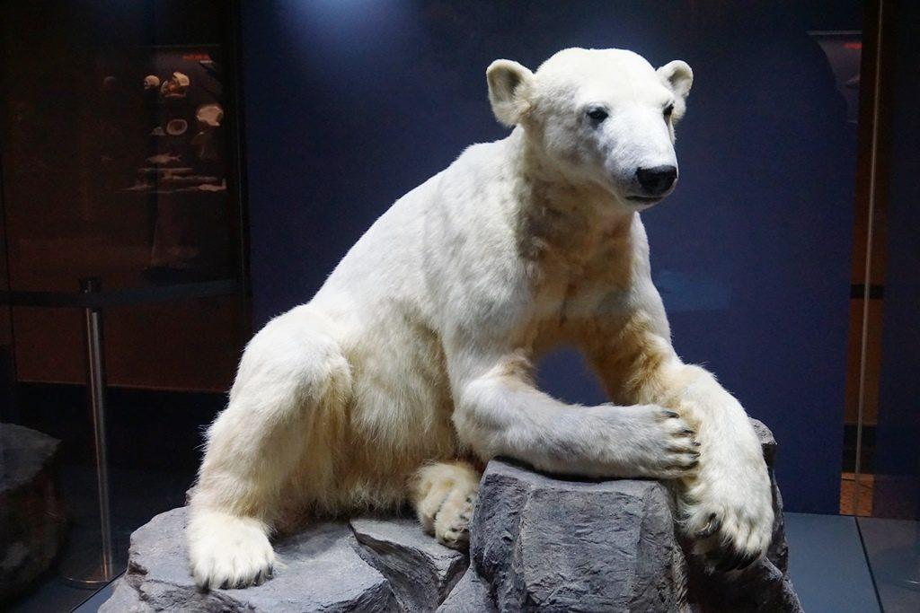 Naturkundemuseum Berlin_Familientipp (28)