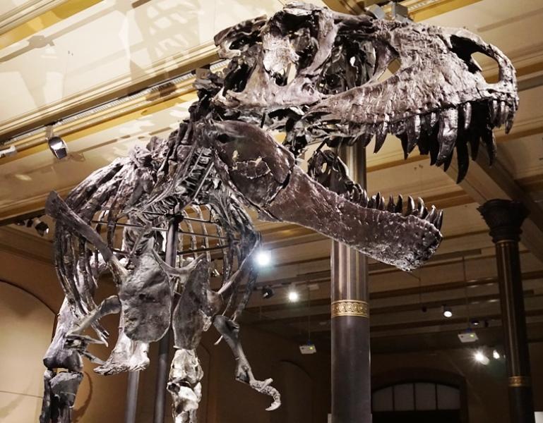 T-Rex Tristan Naturkundemuseum