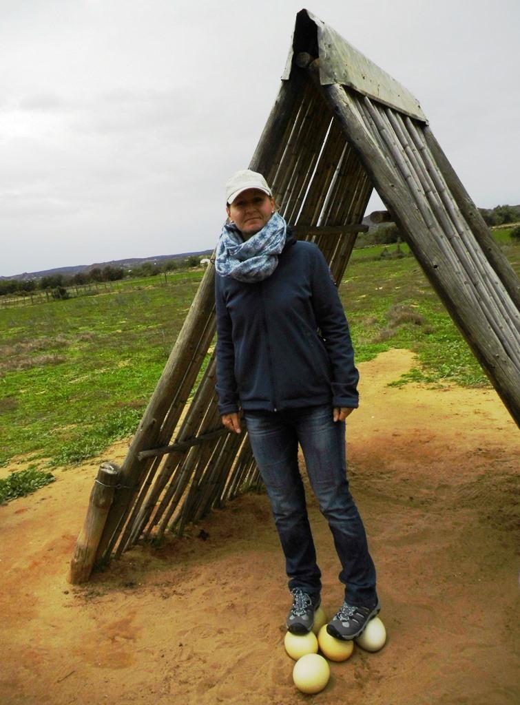 Straußenfarm Oudtshoorn_der Straußenei-Test