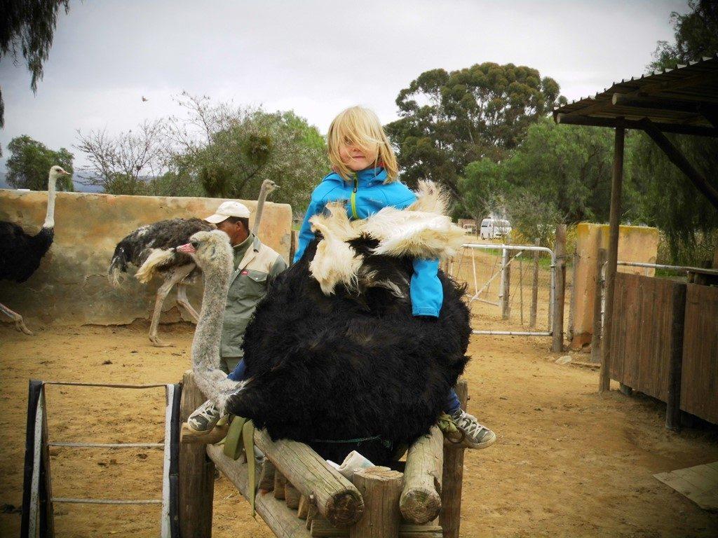Straußenreiten Oudtshoorn_Reisen mit Kindern_Südafrika