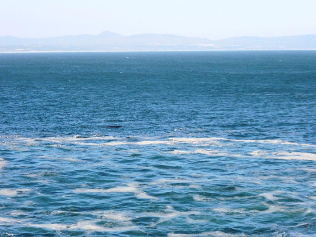Walbeobachtung von Hermanus, Walker Bay