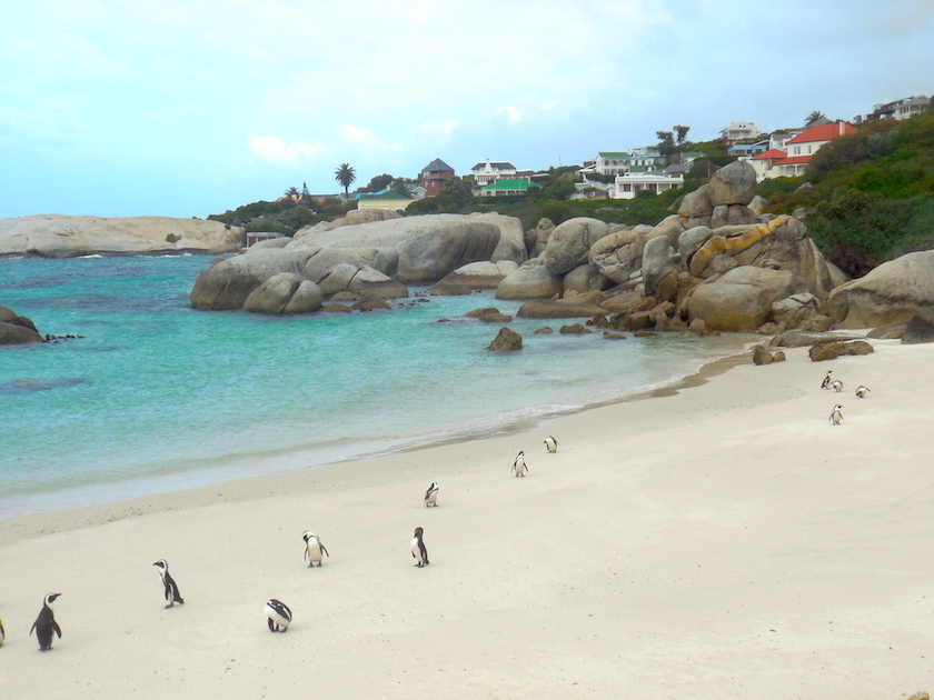 Pinguinkolonie_Südafrika_Boulders Beach