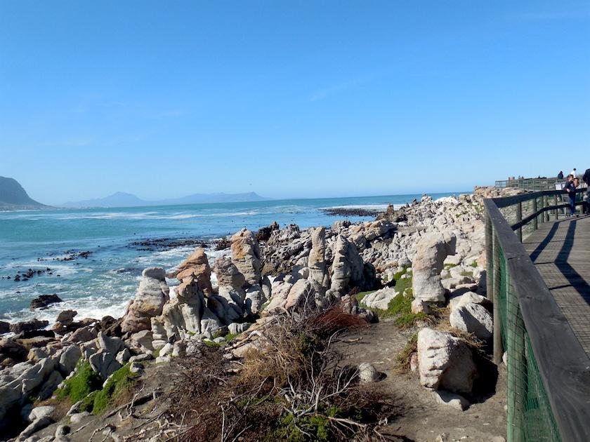 Pinguinkolonie Südafrika_Stony Point