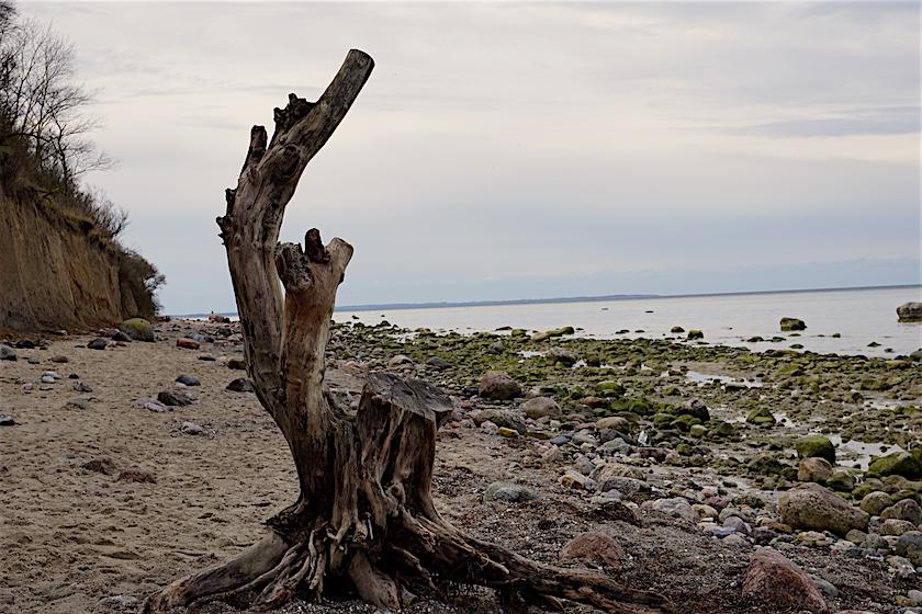 Insel Poel, Steilküste