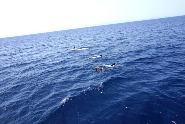 Delfine Griechenland, Bootstour Skopelos - Alonissos