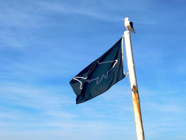 Hai Warnung, Flaggenwarnsystem Südafrika