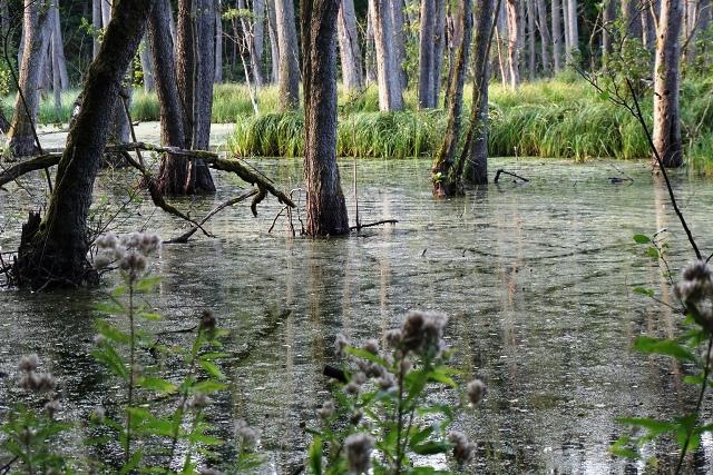 Wanderung Briesetal, Sumpflandschaft Brandenburg