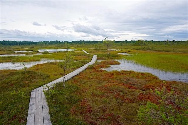 estland-moorwanderung-soormaa-nationalpark