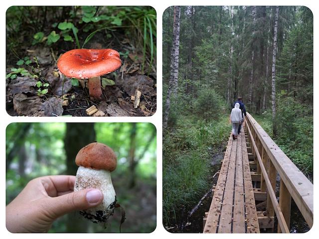 moorwanderung-estland-soomaa-nationalpark2