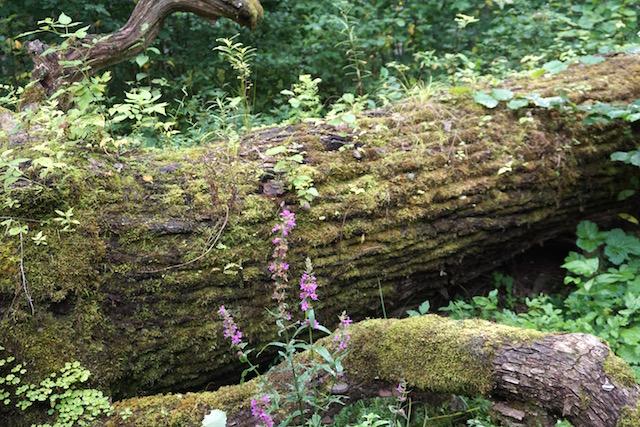 moorwanderung-estland-soomaa-nationalpark