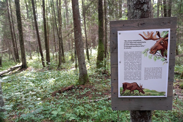 Moorwanderung Estland Soomaa Nationalpark