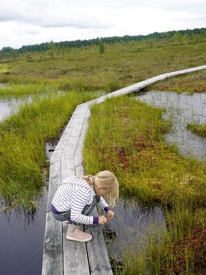moorwanderung-soomaa-nationalpark-estland