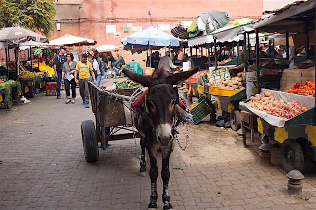 marrakesch-medina-eselskarren