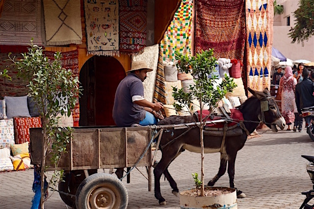 marrakesch-reisetipp-medina-eselskarren