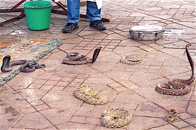 marrakesch-reisetipps-jemaa-el-fna-schlangen