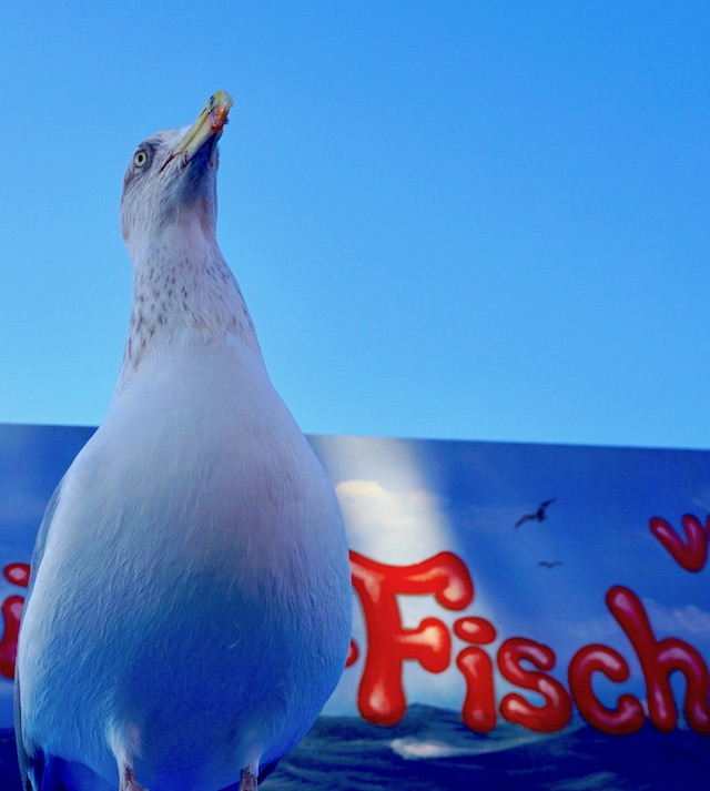 moewe-fischstand-warnemuende