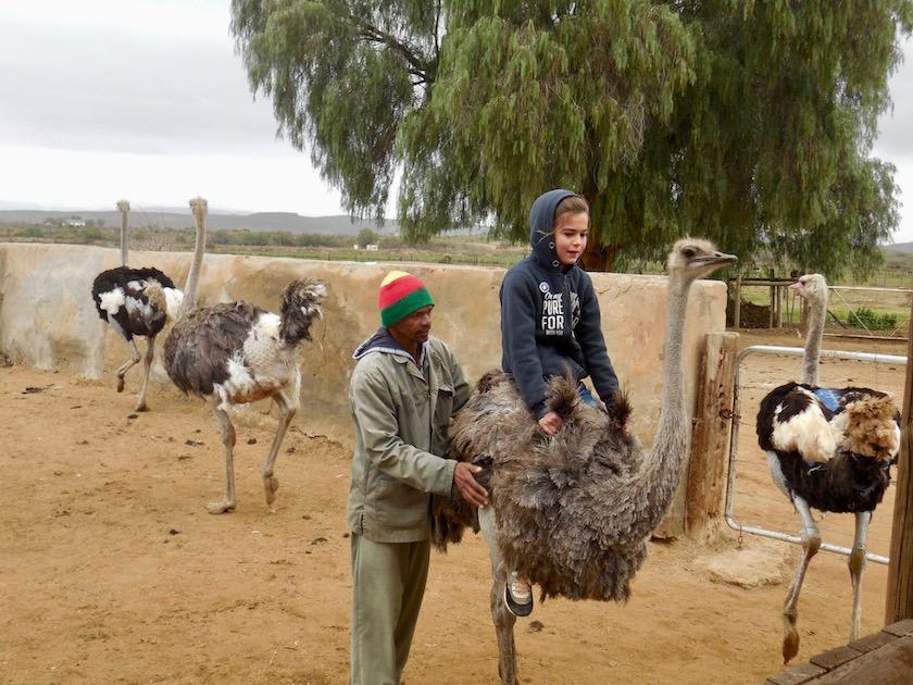 Straußenreiten Südafrika